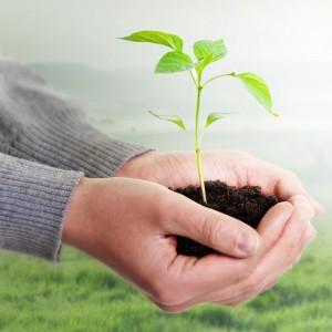 zarte-pflanze
